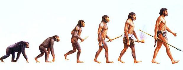 7EF – Adaptação e Evolução
