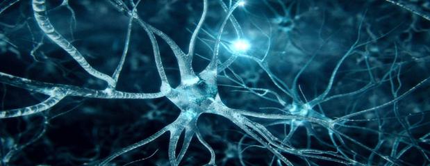6EF – Sistema Nervoso